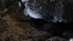 A gelatinous mass of bacteria growing near a vent site. Image