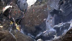 At least two species of shrimp, yellow shelled mussels, a crab, and other life forms can be found in this image. Image