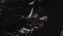 A small prickly sponge? Image