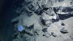 A beautiful white glass sponge seemingly out of place in this stark environment Image