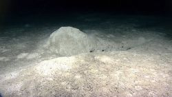 Large gouge in sediment with accompanying large pile of sediment Photo