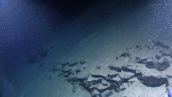 Assemblage of material in water column - sediment or biological in origin? Image
