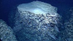 A rock pillar covered on top with clay-like material and on its sides with bluish-gray sponges Image