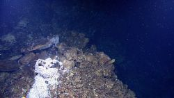 Shimmering water shows location of hydrothermal vent with agglomeration of shrimp and hydrothermally altered rock Photo