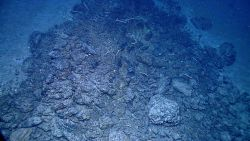 A rock outcrop with numerous tubeworms Image