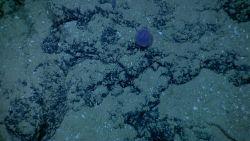 Round purple unidentified animal Photo