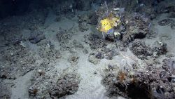Yellow sponge, crinoids, small corals and other life forms. Photo