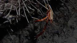Squat lobster and worm tubes. Photo