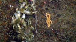 From catsharks to sea stars, the diversity of marine life on shipwrecks is often higher than in surrounding areas. Photo