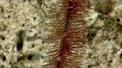 Deep sea coral Photo
