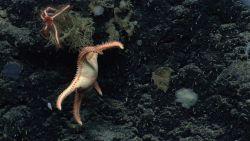 Sea star. Photo
