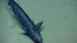 Deep sea fish Photo