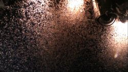 A swarm of krill with larger predators. Image