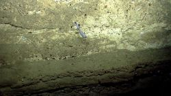 Deep sea fish. A grenadier / rattail silhouetted against a vertical cliff Photo