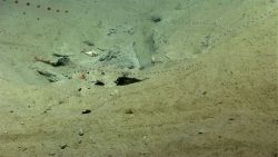 Salps, two large shrimp, and a large hermit crab in a whelk shell are seen in an area of landslide debris. Photo