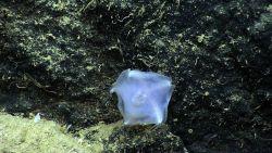 A translucent slime star. Image