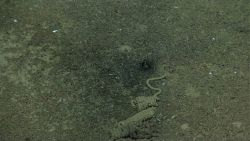 A black stain on the seafloor Image
