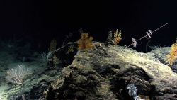 A rock outcrop colonized by various corals and a few sponges. Image