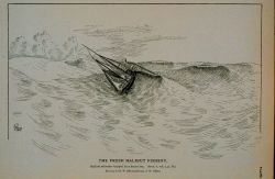 Halibut schooner tripped by a heavy sea Drawing by H Photo