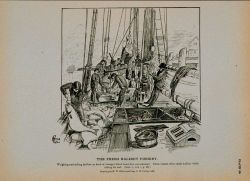 Weighing and selling halibut on deck of George's Bank hand-line cod schooner Drawing by H Photo