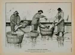Dressing cod on deck of fishing schooner Drawing by H Photo