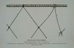 Method of hanging cod gill-nets in Norway From Bulletin U.S Photo