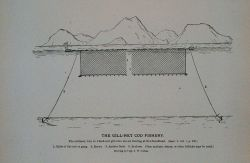 The ordinary way in which cod gill-nets are set floating at Newfoundland From Bulletin U.S Photo