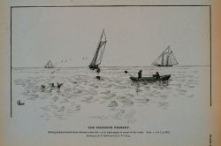 Setting haddock trawls from schooner under sail; Set at right angles to course of the vessel Drawing by H Photo
