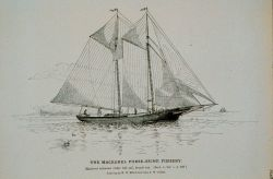 Mackerel schooner under full sail, bound out Drawing by H Photo