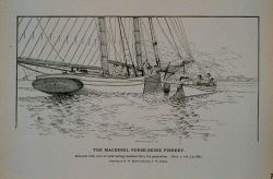 Mackerel schooner with crew at work bailing mackerel from the purse seine Drawing by H Photo