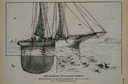 Mackerel schooner with pocket or spiller shipped at sea Drawing by H Photo
