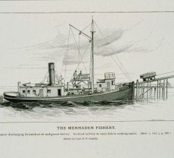 Menhaden steamer discharging its catch at the oil and guano factory Incline railway to carry fish to cooking tanks From a sketch by Capt Photo