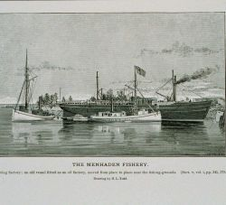 Menhaden floating factory Photo