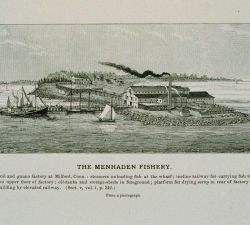 Menhaden oil and guano factory at Milford, Conn Photo