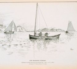 Fishermen in quoddy boat hauling herring gill-nets Drawing by H Photo