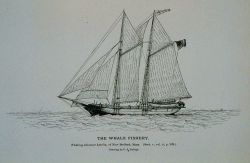 Whaling schooner Amelia, of New Bedford, Massachusetts Drawing by C Photo