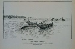 Makah Indians whaling at entrance to Fuca Straits Drawing by H Photo