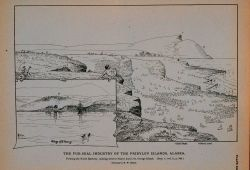The North Rookery, looking west to Starry Ateel Saint George Island, village of Saint George Drawing by H Photo