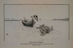 Diving for logger-head turtle; Morehead City, North Carolina Drawing by H Photo