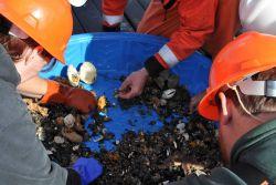Sifting through bottom trawl material. Photo
