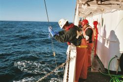 Sending the messenger down the line to open the net for collection with Tucker midwater plankton trawl. Photo