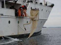 Tucker midwater trawl recovery. Photo