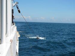 Trawl doors in water. Photo