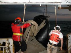 Deploying plankton tow nets. Photo