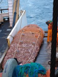 A full dod end coming aboard during trawling operations. Photo