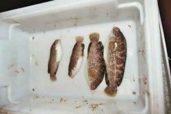 Prowfish Photo