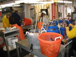 Sorted tubs of fish ready for study and measurement by scientific party. Photo