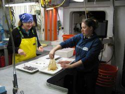 Scientist demonstrating some displeasure at handling jellyfish. Photo