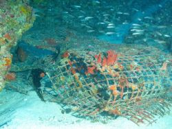 Marine debris - an old deserted fish trap now serving as habitat for a variety of species. Photo