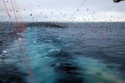 Sea birds Photo